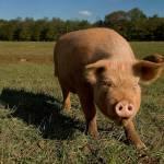 Stanton Kutch Profile Picture
